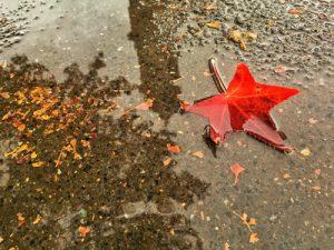 foglia rossa caduta nell'acqua